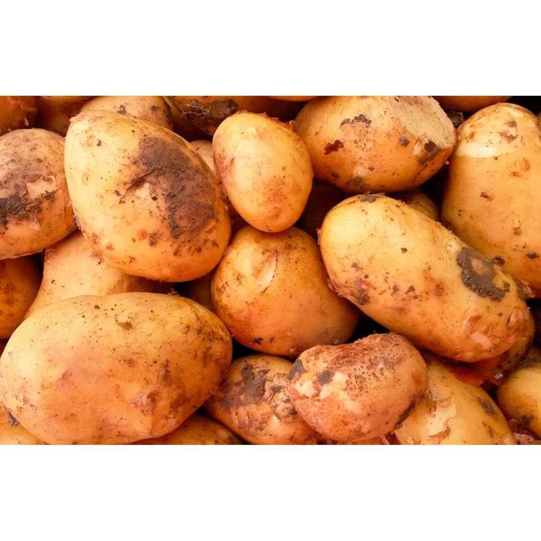 Тип картофельного плода
