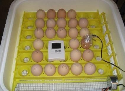 Как хранить яйца для инкубации: сколько и как можно держать их до закладки, а также как выбрать и проверить подходящие образцы для наилучшего результата? selo.guru — интернет портал о сельском хозяйстве