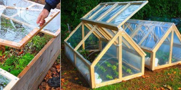Правильная посадка и агротехника выращивания перца в теплице, чтобы был хороший урожай