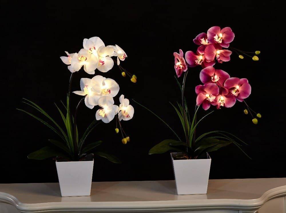 Орхидея камбрия (cambria): пересадка после покупки и уход в домашних условиях