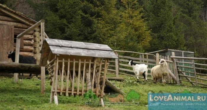 Особенности строительства овчарни своими руками