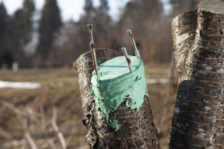 Правильная прививка и перепрививка плодовых деревьев весной: видео, как прививать фруктовые деревья