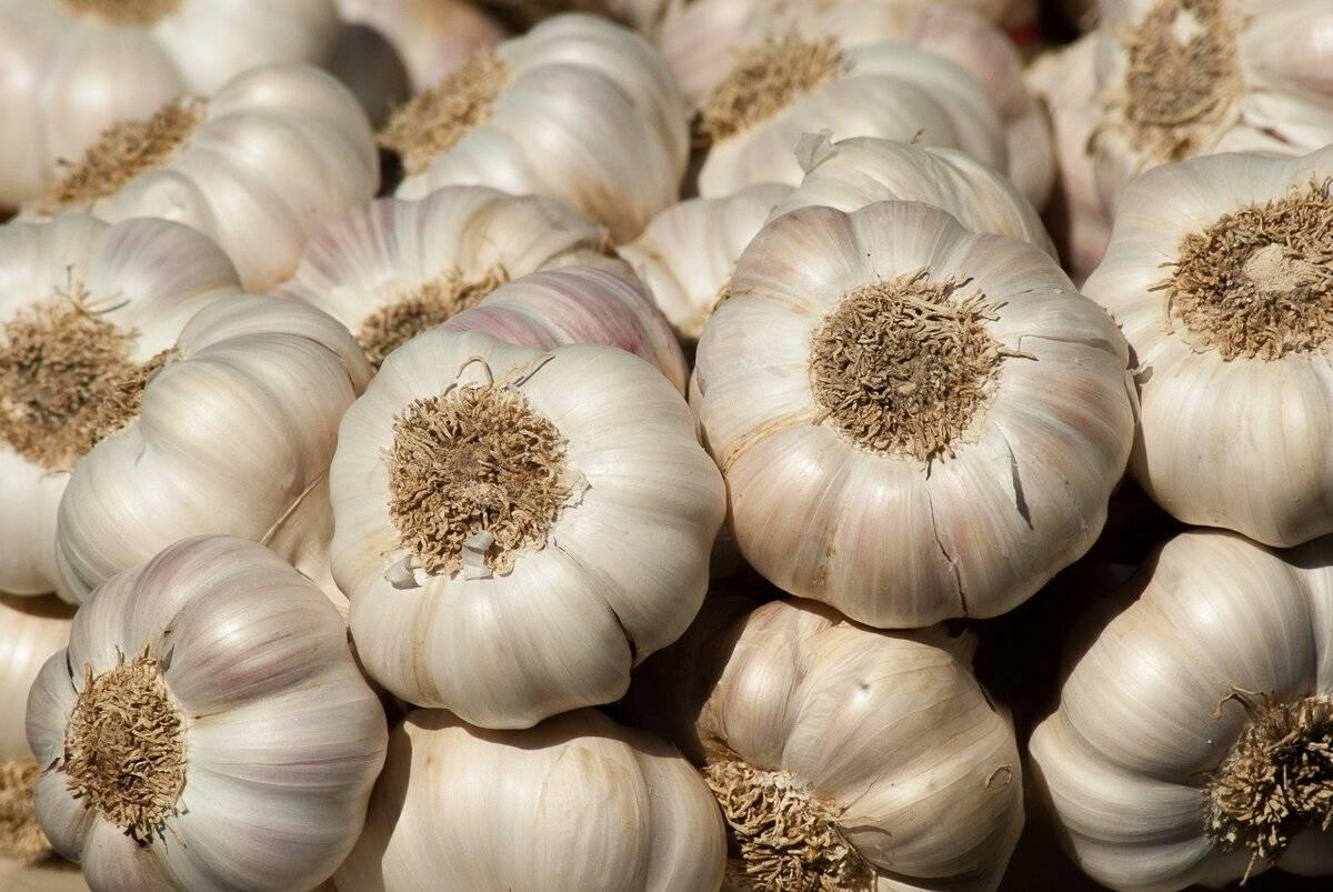 Урожайность чеснока с 1 га и сотки: лучшие сорта