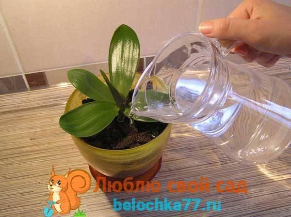 Полезные советы о том, какой водой поливать орхидею в домашних условиях