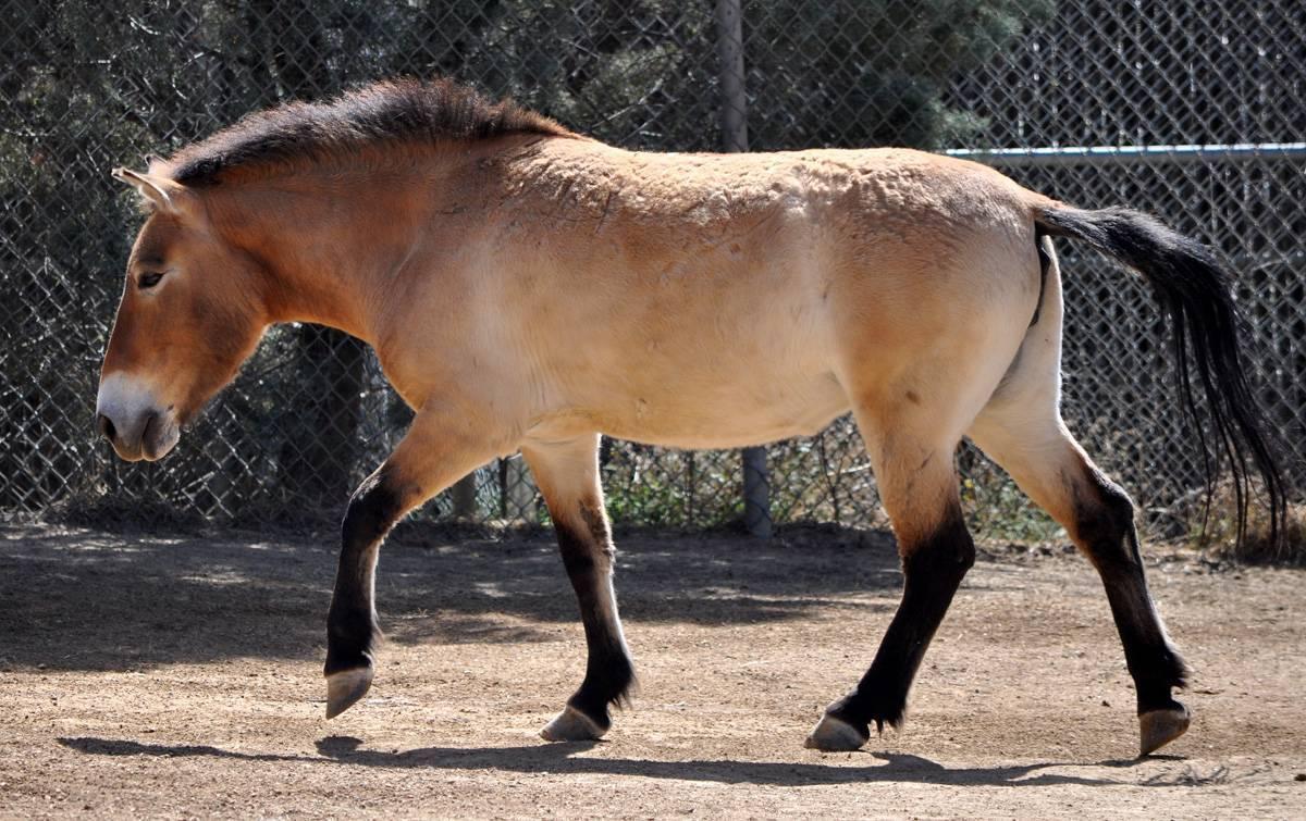 Все слова (анаграммы), которые можно составить из слова «монгольская лошадь»