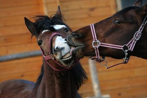 Сколько лет живут лошади? 2021