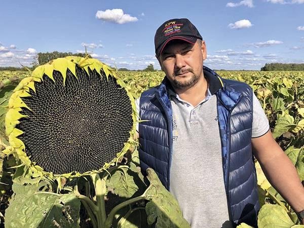 Гибриды подсолнечника – выбираем по урожайности и устойчивости к заболеваниям