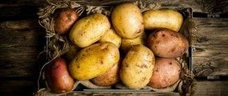 Почему чернеет картошка внутри при хранении и как с этим справиться?