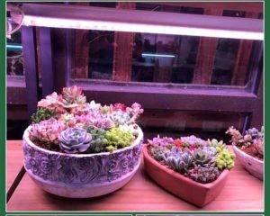Фитолампа для растений: что это, как использовать, принцип работы, виды ламп