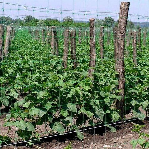 Шпалера для огурцов - 135 фото самых простых и удобных вариантов выращивания огурцов