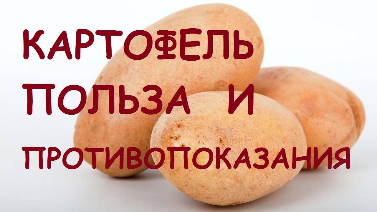 Сырой картофель: польза и вред для организма человека, а также каковы лечебные свойства, почему стоит есть кожуру, как сделать маску для лица и кожи вокруг глаз? русский фермер