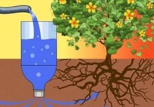 Капельный полив для помидоров в теплице: как часто и правильно проводить