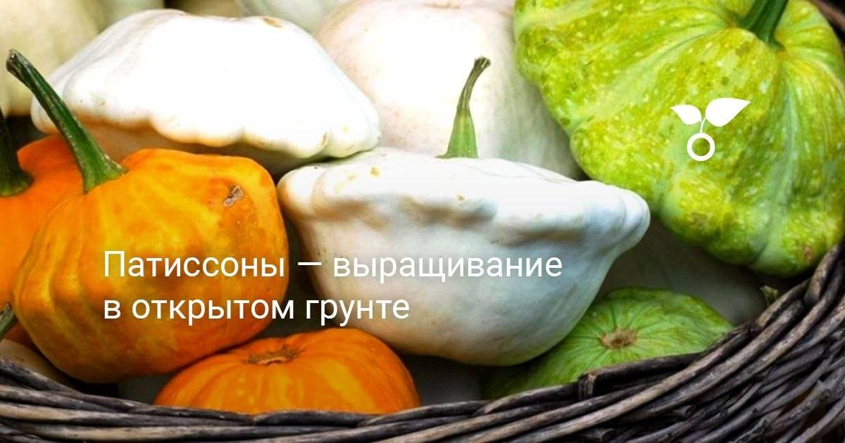 Овощи патиссоны: выращивание из семян, посев на рассаду и в открытый грунт, видео, посадка и уход на грядке