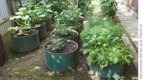 Кабачки в ведре, мешках – оригинальные способы выращивания для вас