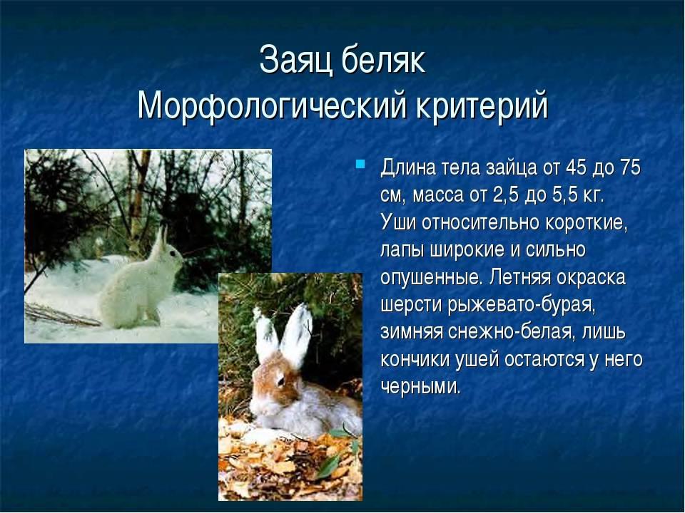 Заяц - виды и описание, фото с названиями | сколько видов зайцев существует в россии и мире
