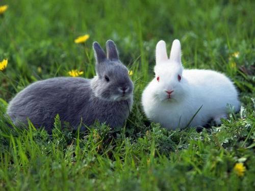 Как поить кроликов: полезные советы кролиководам