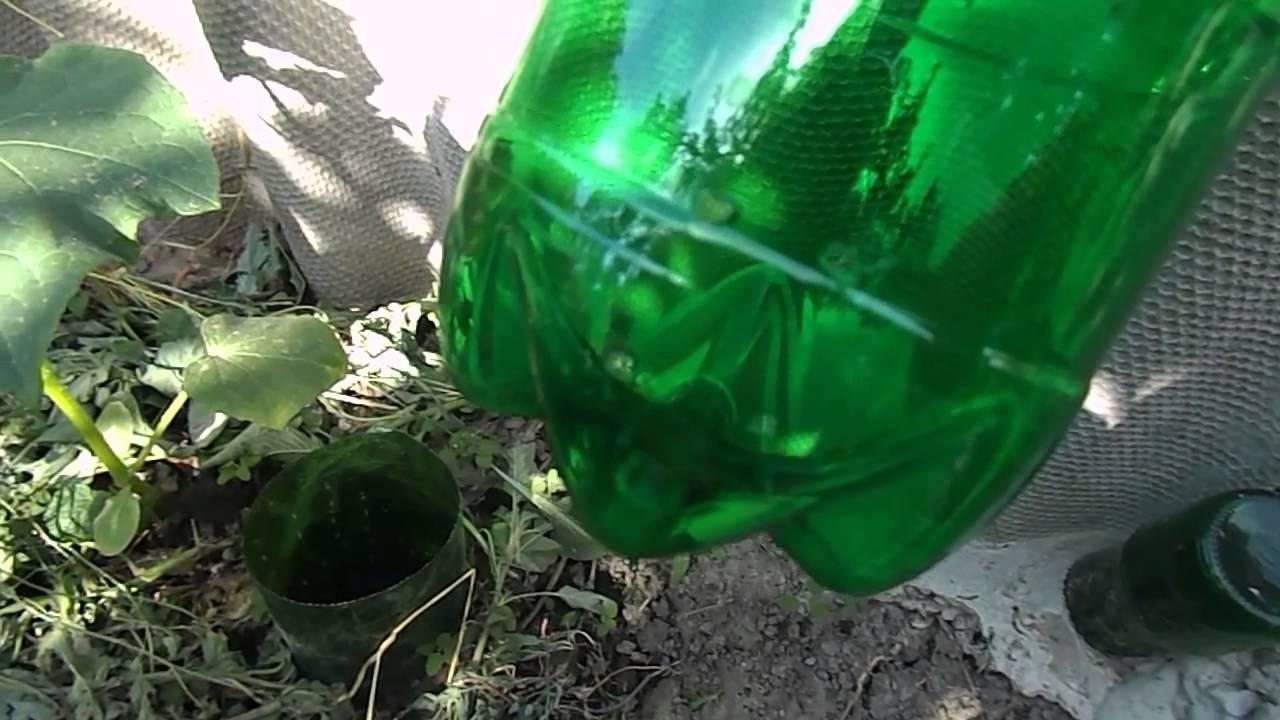 Капельный полив для огурцов: норма полива, расход воды, схема, фото