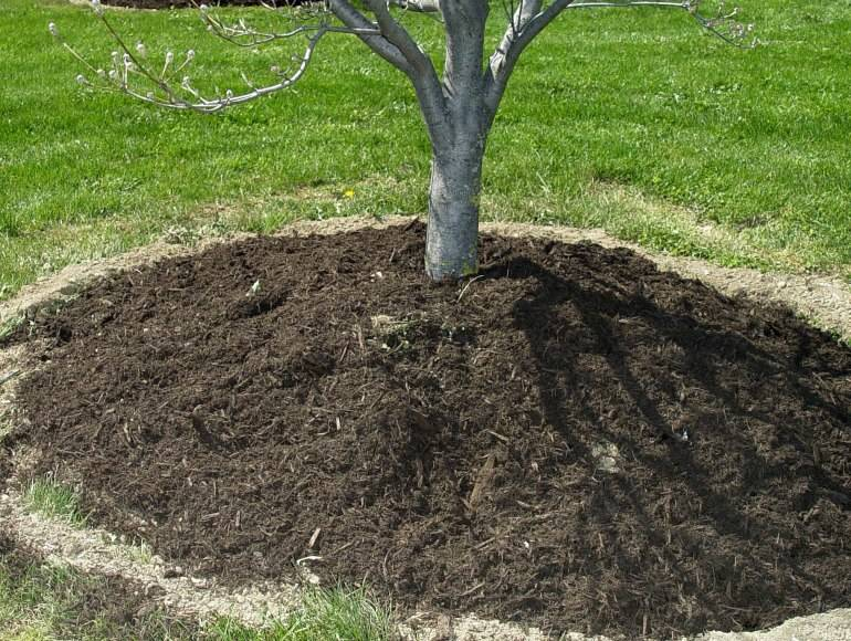 Подкормка яблони весной минеральными удобрениями при посадке