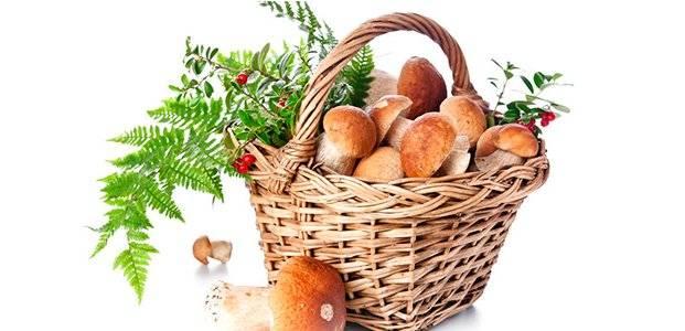 Как правильно чистить грибы – рекомендации по видам