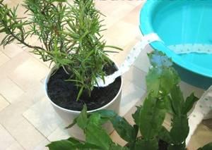 Системы автополива комнатных растений и цветов