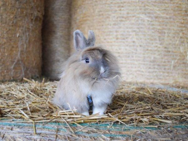 Можно ли давать кроликам капусту (кочаны и капустные листья)