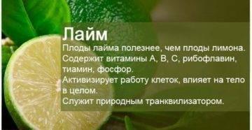 Лайм - полезные свойства, использование в кулинарии. рецепты с лаймом. - автор екатерина данилова - журнал женское мнение