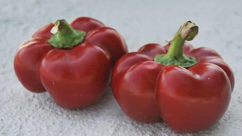 Как правильно вырастить перец из группы гогошары: особенности сортов и отзывы дачников
