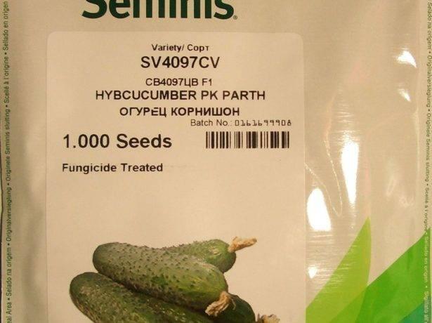Огурец св 4097 цв f1: описание, выращивание, уход, фото