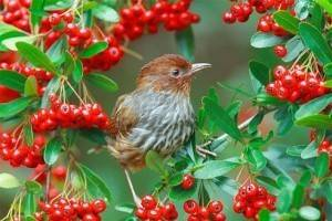 Рейтинг лучших отпугивателей птиц на 2021 год