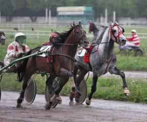 Аллюр: основные виды бега лошади, их названия и характеристики