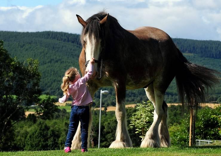 Самые быстрые лошади в мире 2021