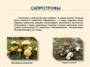 Животные, питающиеся грибами