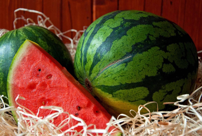 Как правильно выращивать арбузы в подмосковье