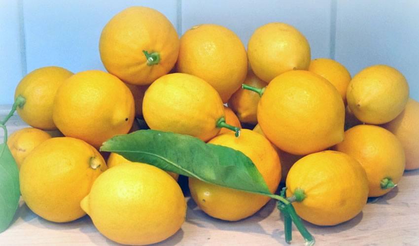 Как хранить лимоны в домашних условиях свежими на долго, в холодильнике