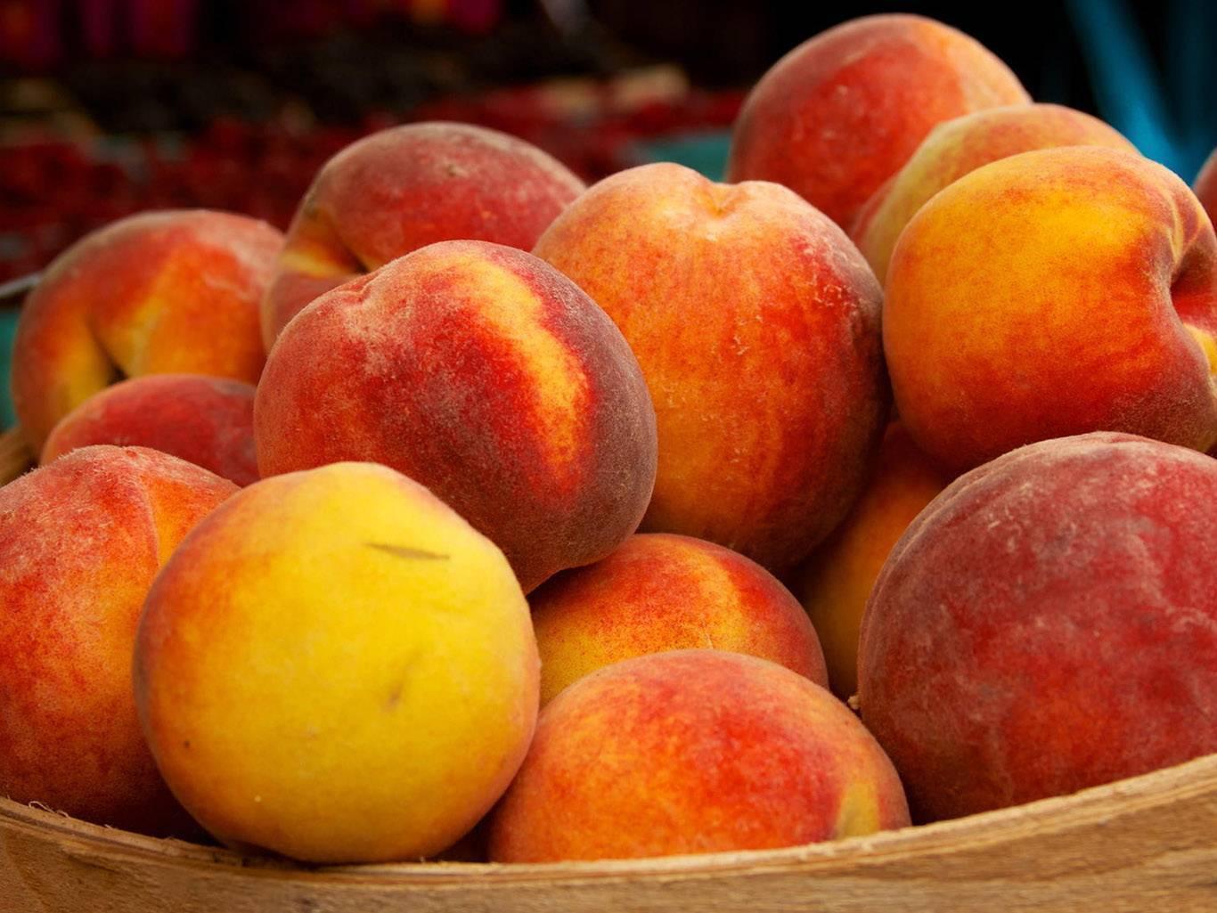 Посадка и выращивание персика из косточки в домашних условиях и открытом грунте