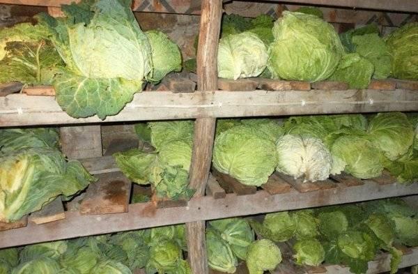 Как правильно хранить капусту в погребе (подвале, квартире) зимой в домашних условиях?