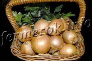 Описание, характеристики и особенности выращивания репчатого лука центурион