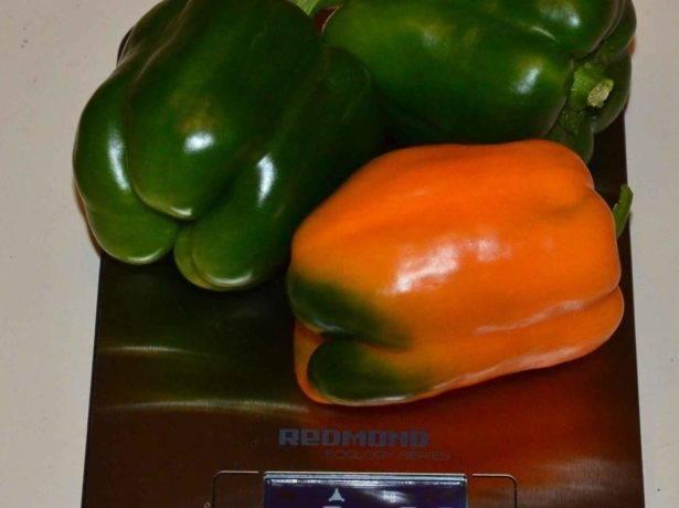 Перец биг папа - характеристика и описание сорта, фото, урожайность, достоинства, недостатки, отзывы