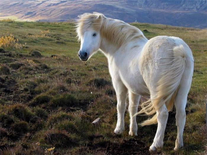 Лошадь - 99 фото самого основного животного для верховой езды