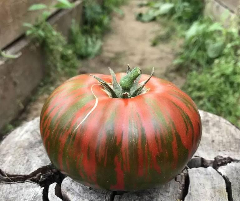 Описание сорта томата Полосатый шоколад — отзывы овощеводов