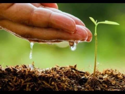 Посадка семян перца на рассаду: все этапы от а до я