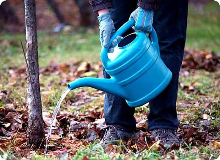Чем подкормить яблоню весной, летом и на зиму. виды удобрений, проведение мульчирования и внекорневых подкормок