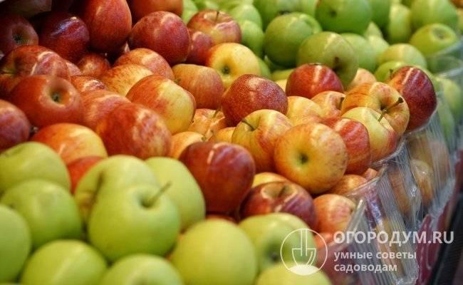 Сбор и хранение осенних сортов яблок: когда собирать и какие плоды оставлять на зиму?