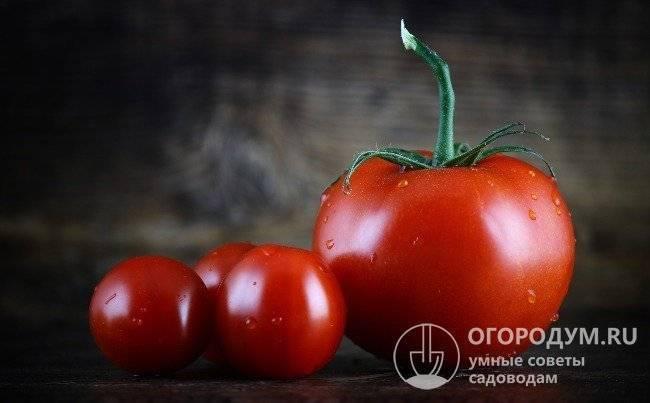 1000 + сортов помидор: список самых известных и популярных с описанием