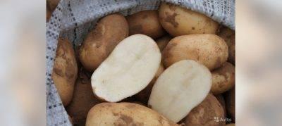 Удобрение картофеля перед окучиванием