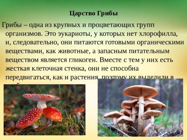 Плодовое тело гриба — википедия. что такое плодовое тело гриба