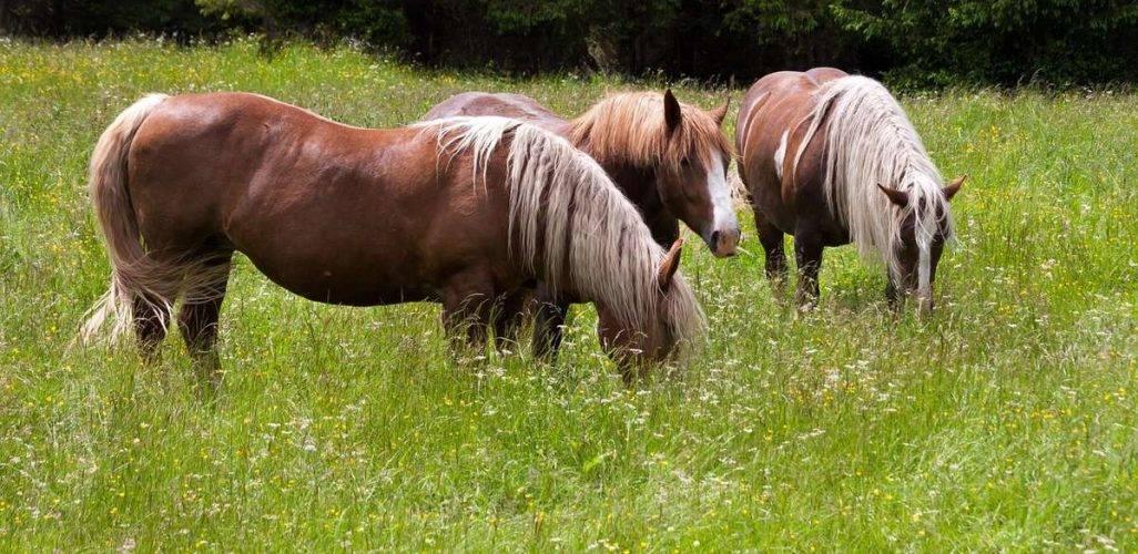 Сколько живут лошадь — что влияет на продолжительность жизни лошадей