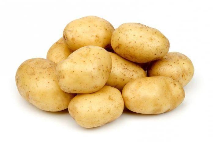 Картофель уладар - неприхотливый сорт белорусской селекции