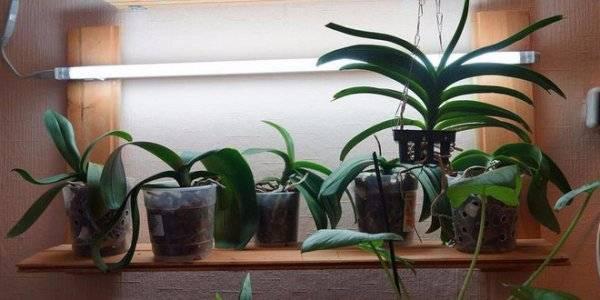 Почему не цветут орхидеи в домашних условиях, основные причины и что делать дома, как его стимулировать, если орхидея долго не распускается или плохо и быстро отцветает, пошагово фото и видео?
