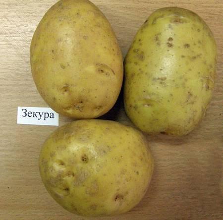 Картофель «зекуру»: описание сорта, фото, отзывы